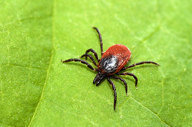 Tick control services